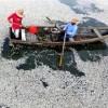 meksikada-balık-olumleri