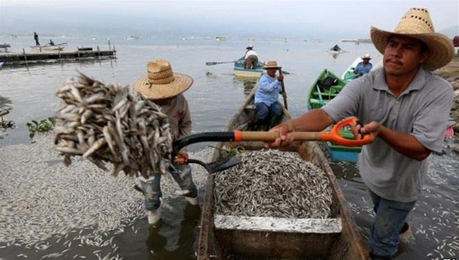 meksikada-balık-olumleri-2