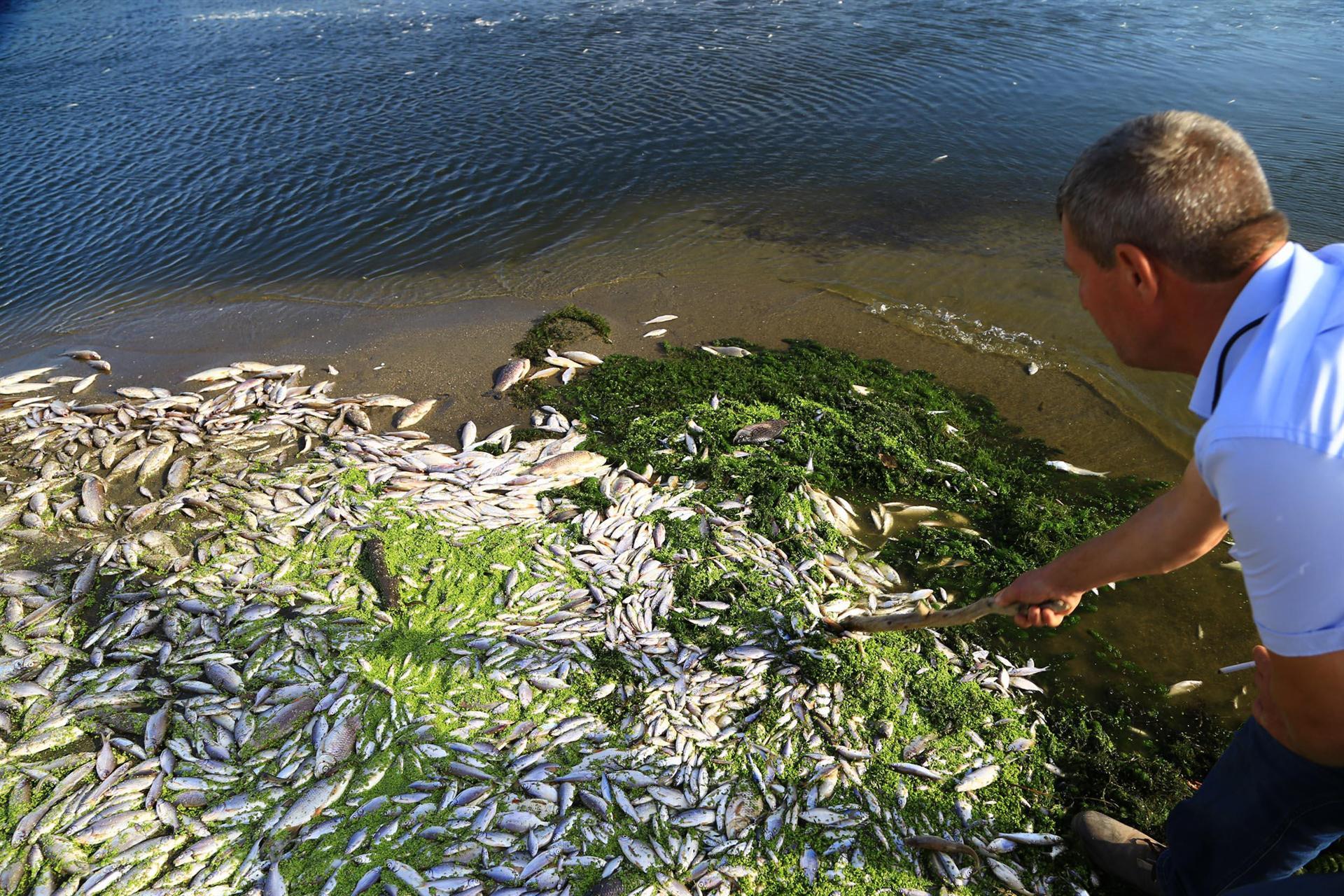 Bursada bir derede daha toplu balık ölümü